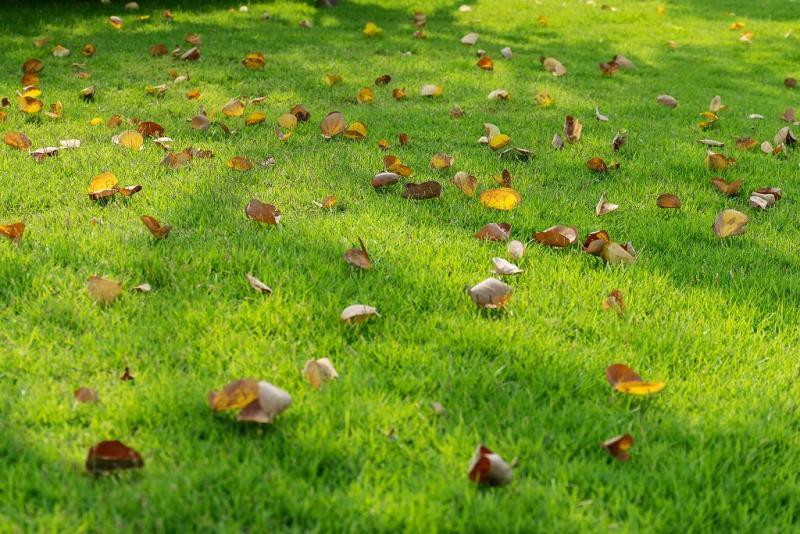 Winterklaar Maken Tuin : Tuin winterklaar maken opheusden bunt groen hoveniersbedrijf